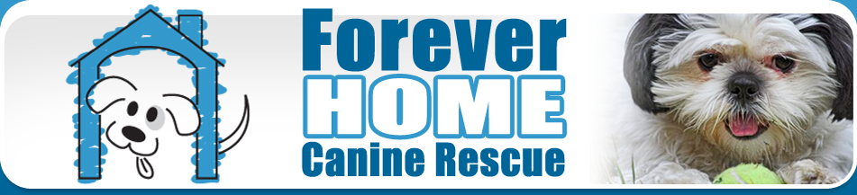 Canine Rescue for Dogs & Cats